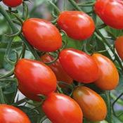 legume-tomate-cerise